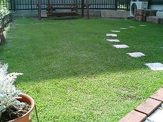 5月14日の芝生2