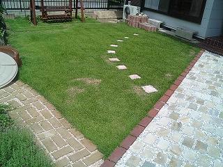 芝生 さび病