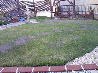 ガーデニング 芝生