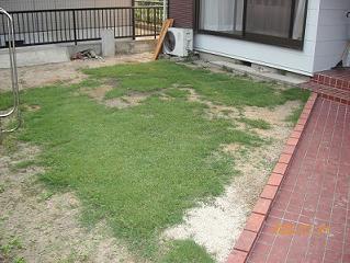 ガーデニング 芝生1