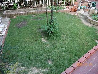 ガーデニング 芝生2